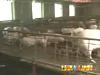 [經濟半小時]豬肉價格暴漲的背後