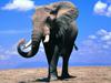 [講述] 大象拔牙