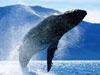 [講述] 探秘巨鯨