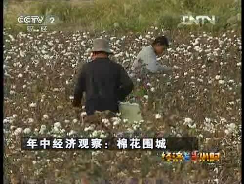[經濟半小時]年中經濟觀察:棉花圍城
