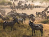 直擊大遷徙 200萬動物大軍穿越大草原