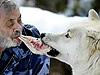 男子飼養29頭狼 與狼嘴對嘴分食生肉