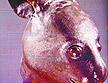 法商人宣布向中國歸還圓明園鼠首兔首
