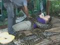 菲律賓:蟒蛇按摩的另類體驗