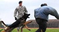 伊拉克:探測爆炸物 警犬顯身手