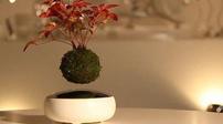 """日公司出售""""懸浮盆栽""""令人驚嘆"""