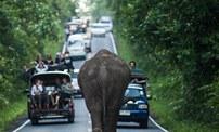 """調皮的""""造堵者"""":泰國大象公路上散步"""