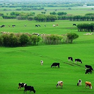 内蒙古规划旅游收入5年翻一番左右
