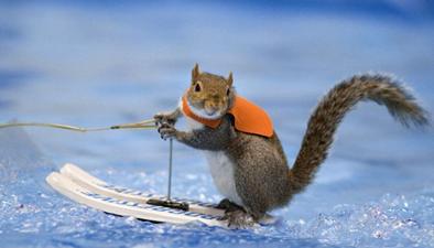 可愛松鼠玩起衝浪