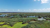 2020年中國濕地面積不少于8億畝