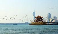 山東青島海鷗雲集 海濱現春日和諧美景