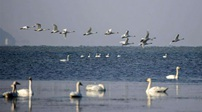 鄱陽湖水位突破11米大關 結束枯水期