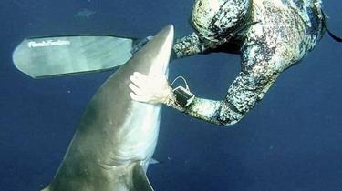 驚奇!鯊魚求救 讓潛水員拔出體內魚鉤