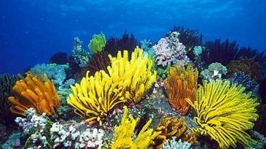 海南:記者直擊海底珊瑚培植