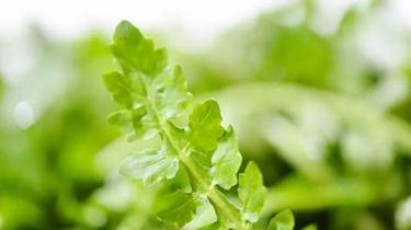 春季吃野菜 不是想吃就能吃