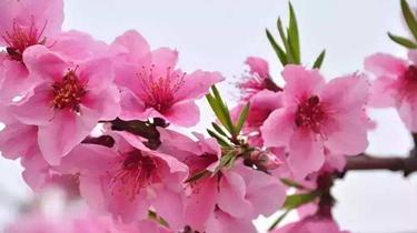 中國各地鮮花盛開 遊人如織