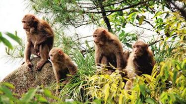 女孩猴群出沒 只會尖叫爬行