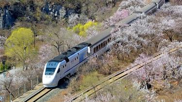 """北京""""花海列車""""屢被逼停 村民被迫封路"""
