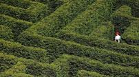 西班牙:最大灌木迷宮 感受迷失樂趣