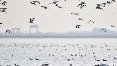 天津迎來北遷候鳥高峰