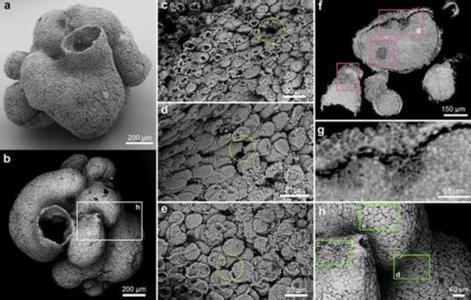 一座礦山挖掉地球6億年化石 科學家們急了