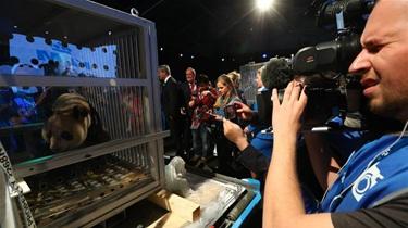 荷蘭:中國大熊貓來了 荷蘭人很激動
