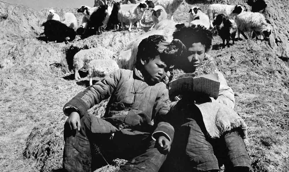 1951年,青海省的兩個牧童在放羊的山坡上看書。