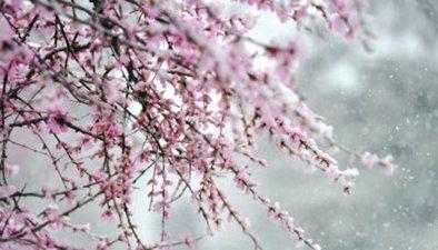 朔州:四月飄雪俏爭春