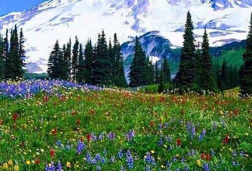 季節性森林 春季來臨 森林復蘇