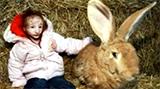 """現實版""""拇指姑娘"""":一輩子長不大 14歲比兔子還小"""