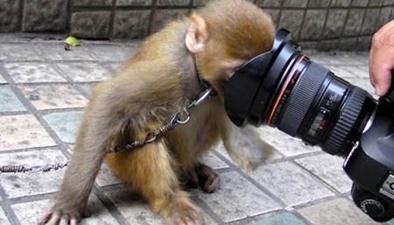 安徽蚌埠:動物園猴子被鐵鏈拴著 到底犯了什麼錯?