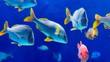 """保護!俄羅斯開設""""海洋生物庫""""超10萬物種被留存"""