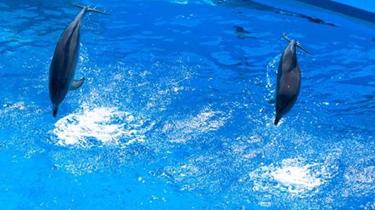 告別!最後一次表演 首爾大公園兩海豚將回歸海洋