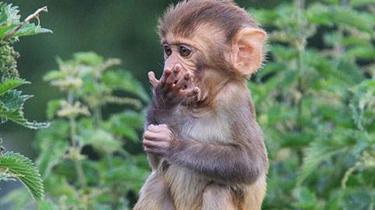 雲南:民警巡邏時撿到小獼猴幼崽