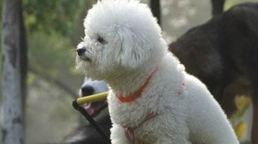 杭州:50萬飾品被盜 鄰居寵物狗為破案立功