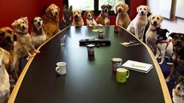 減壓新招:美國加州科技公司鼓勵員工帶狗上班