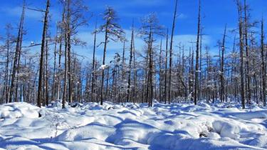 黑龍江:大興安嶺六月再迎新雪