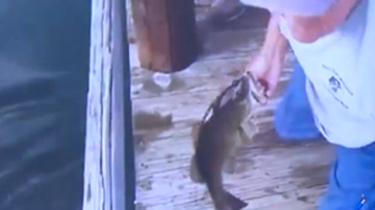 老人反應敏捷 徒手輕松捕魚