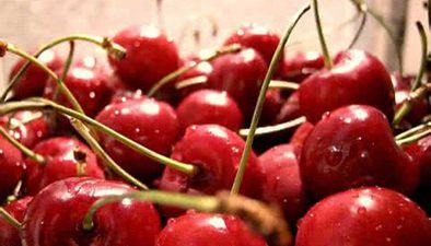 食品安全:櫻桃內的小蟲 多為果蠅蟲卵