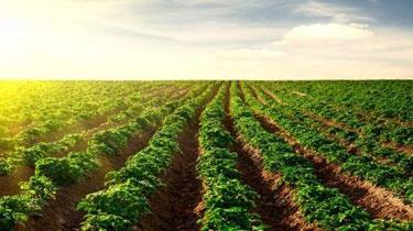 國家土壤環境監測網已初步建成