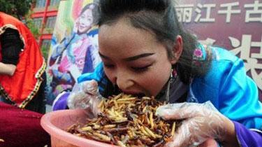 麗江:昆蟲大賽冠軍5分鐘吃1.23公斤