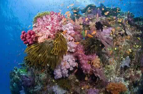 廣西:潿洲島珊瑚礁生態聯合科考珊瑚礁總體趨勢向好
