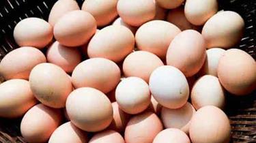 雞蛋價格開啟上漲模式 漲勢能否持續?