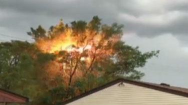美國:電線引燃大樹 動靜似放鞭炮