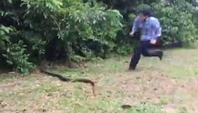 """巴西""""女漢子""""徒手活捉路上超2米長蟒蛇"""