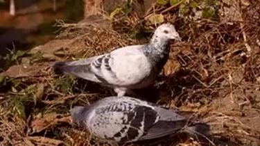 南京一吃貨為解饞夜間打鳥 射殺29只鳥被起訴