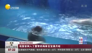 海洋萌寶徵俏名:我國首例人工繁育的海象寶寶滿月啦