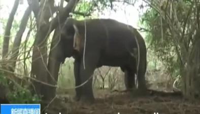 """大象""""抄小路""""溺水被營救"""