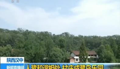 陜西漢中:人鷺和諧相處 村莊成鷺鳥樂園