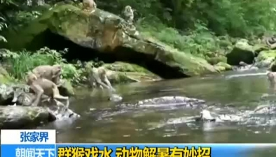 張家界:群猴戲水 動物解暑有妙招
